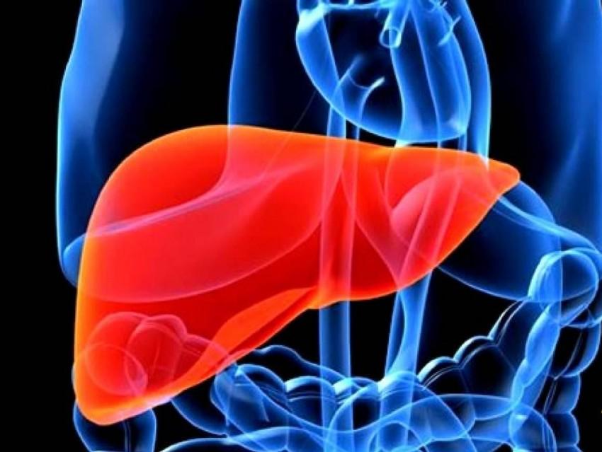 Дифференциальный диагноз цирроза печени от рака печени